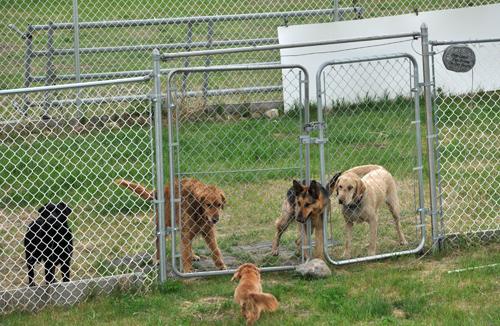 Southern Alberta Dog Rescue