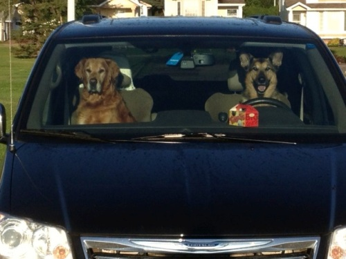 Tango: Nice day for a drive to the off-leash park Wally:  Yes dear