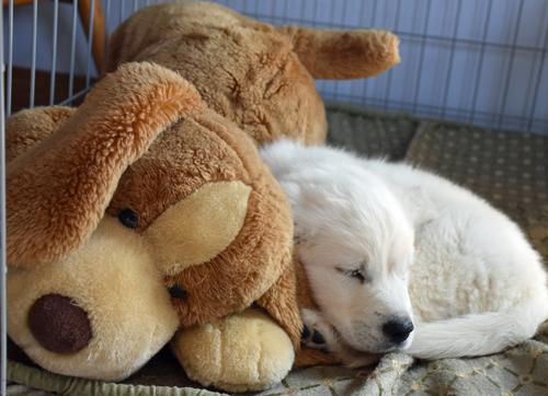 PuppySnuggle