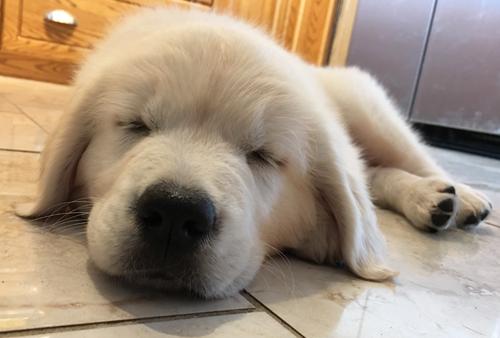 TiredPuppy