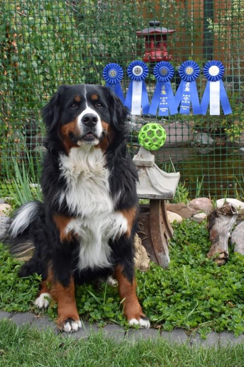 Rally Obedience Dogs Sa Training Scheme