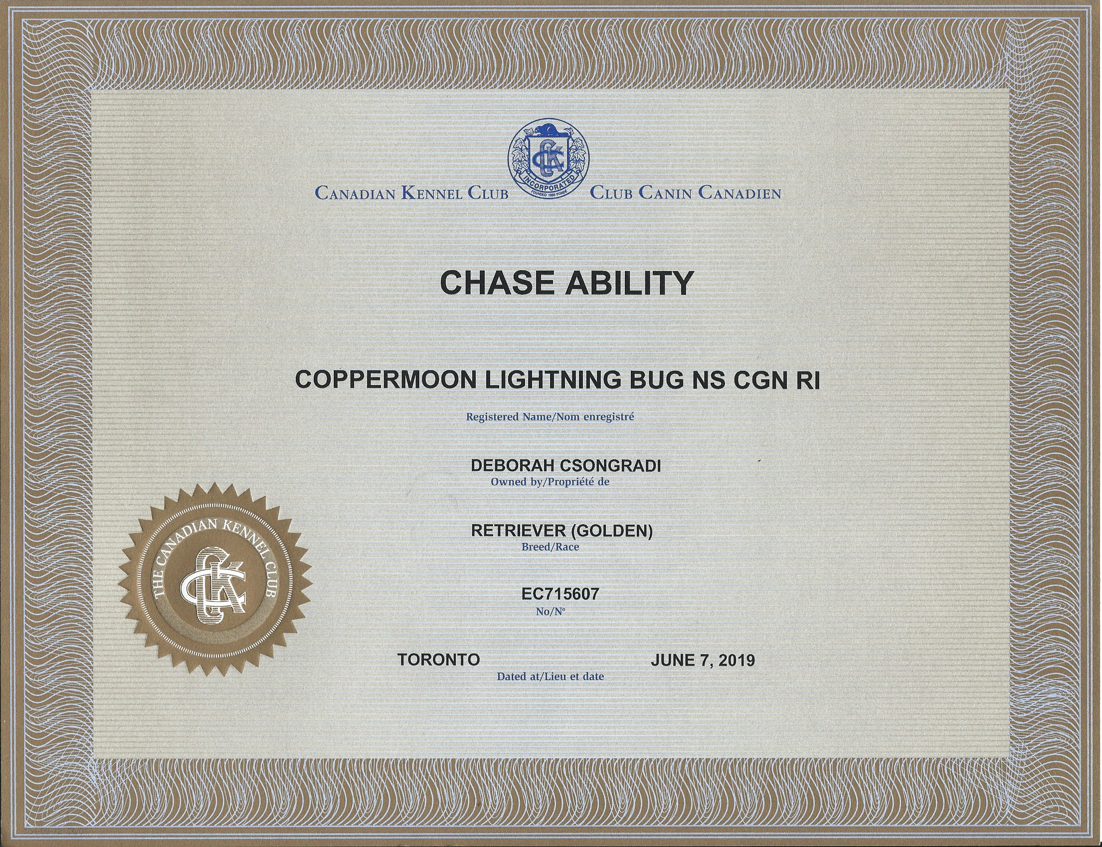 Brodie_CKC-ChaseAbility