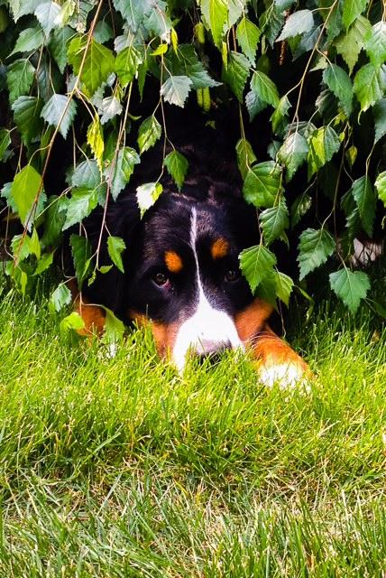 camo_puppy